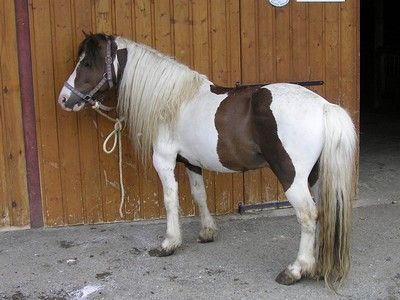 A cheval sur mon homme - 4 6